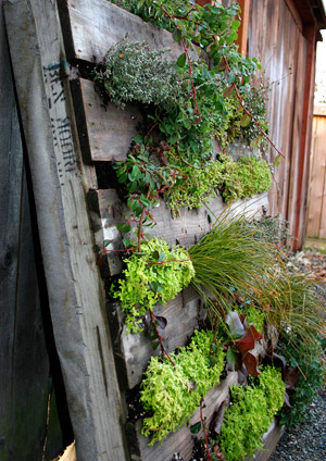 Click Here To See How To Build A Green Wall.