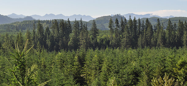 snoqualmie-forest-vista_612