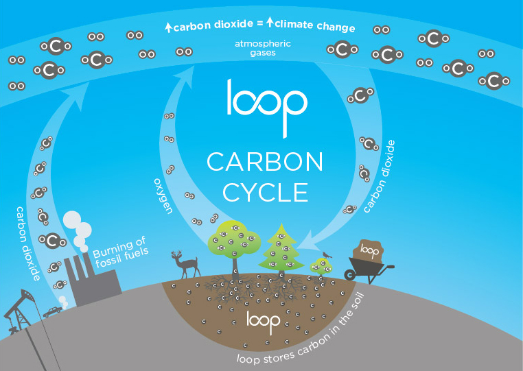 loop carbon cycle
