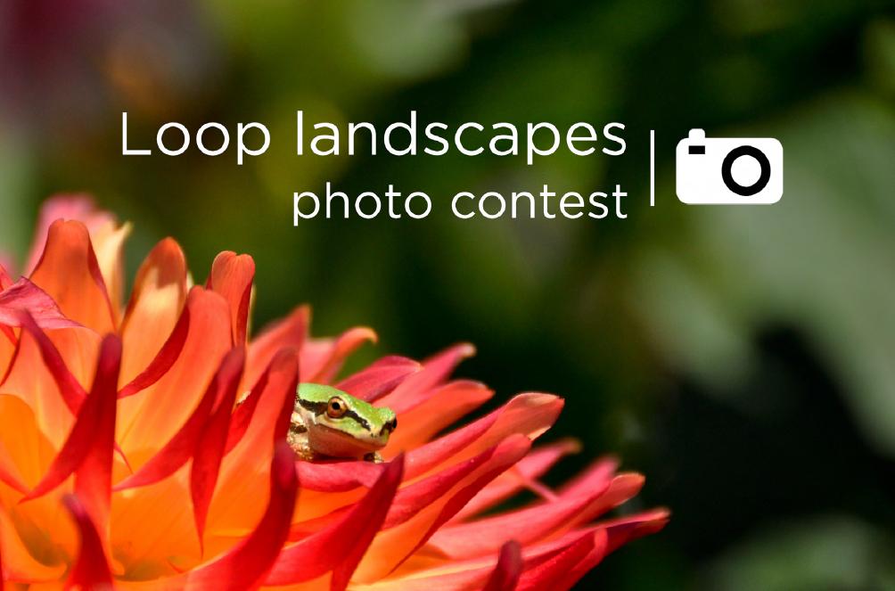 Loop landscapes photo contest
